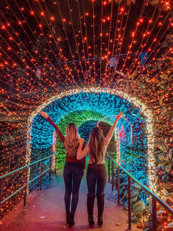 Holiday Lights at Atlanta Botanical Gardens! Atlanta