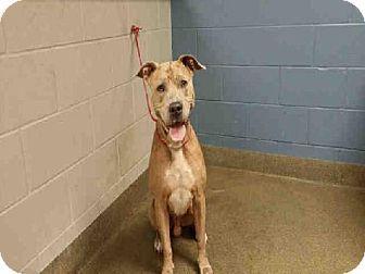 Pin By Lisa Barker On Lisa Barker Pets Pet Adoption Shelter Dogs