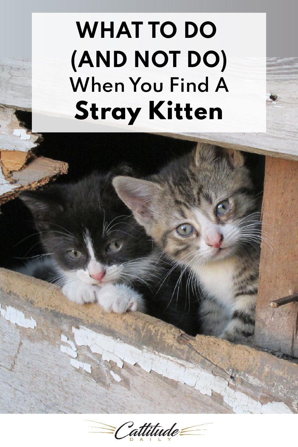 What To Do And What Not To Do When You Find A Stray Kitten In 2020 Kitten Care Kitten Cat Life