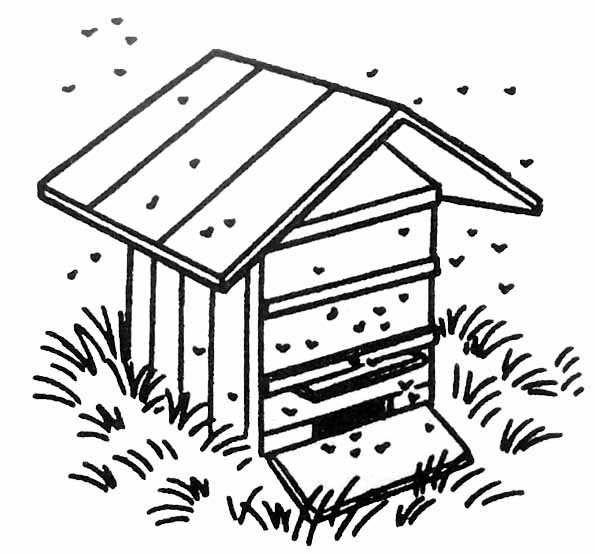 Pingl par fany loly sur abeille abeille dessin ruche abeille et abeille - Coloriage d abeille ...