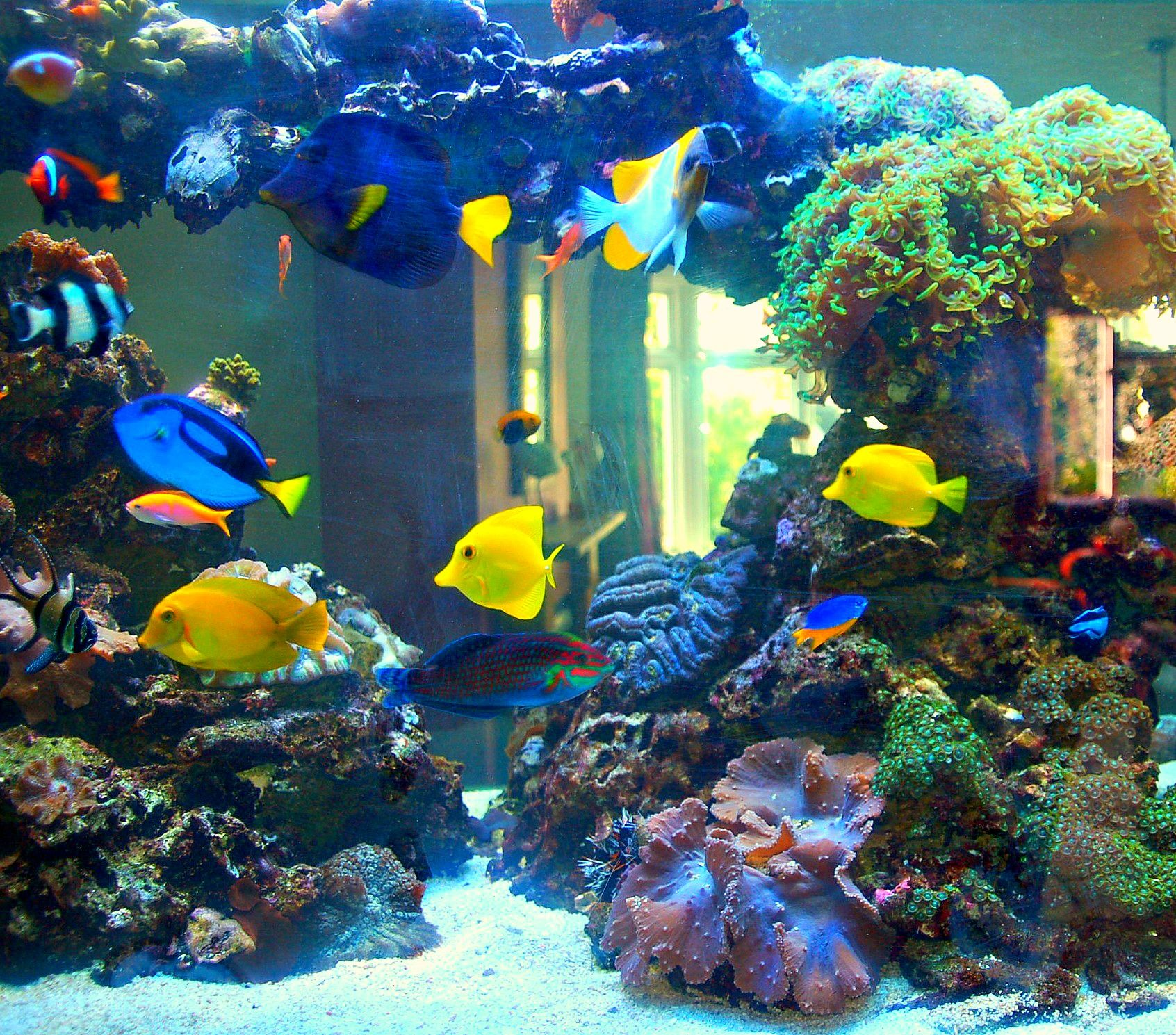 Marine fish and coral aquarium by prestige aquariums for Saltwater reef fish