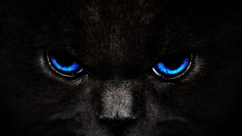 Imágenes De Animales En Hd Para Fondo De Pantalla: Gato Negro Con Los Ojos Azules Fondo De Pantallas HD