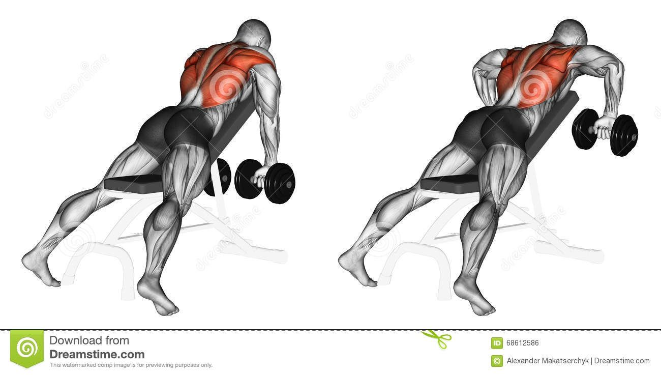 Exercising Incline Bench Two Arm Dumbbell Row Download