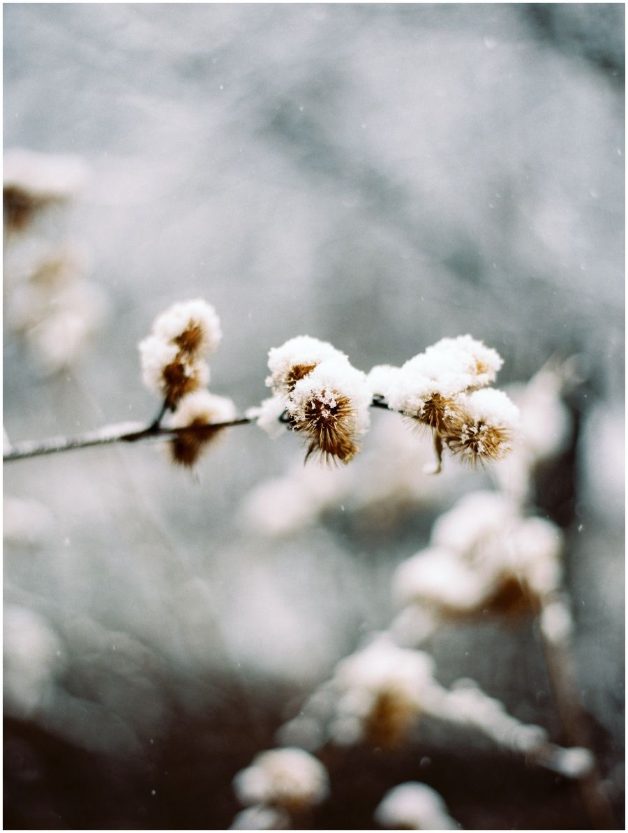 winter wedding lovers this one is for you floral photography