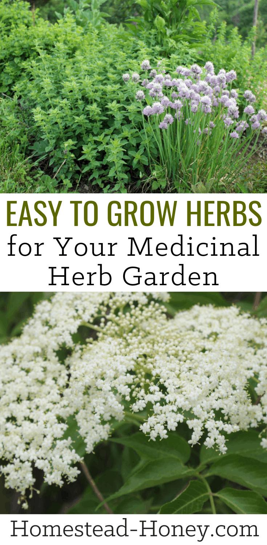 Easy To Grow Herbs For Your Homestead Medicinal Herb Garden