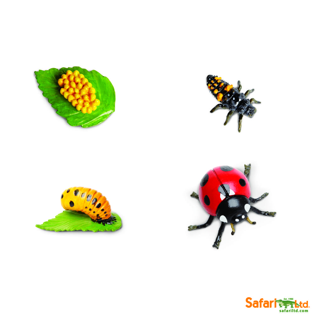Free Safariology® Life Cycles Learning Flashcards Life