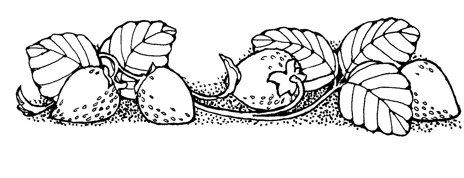 Images For > Black And White Strawberry Clipart | White ...