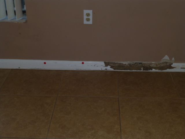 Termite Damaged Baseboard Signs Of Termite Damage Include Bubbling Between The Paper And Paint
