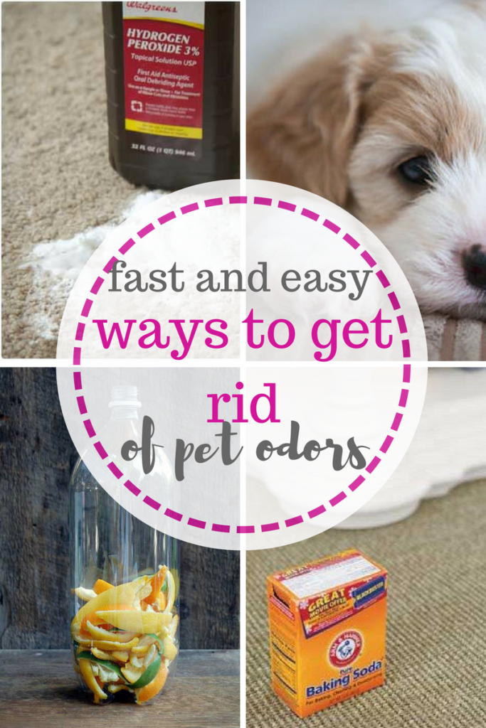 How to remove pet odors from your home. Get Rid of Pet Odors, how