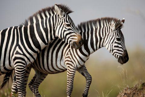 Diaporama les animaux de la savane la savane africaine - Animaux savane africaine ...