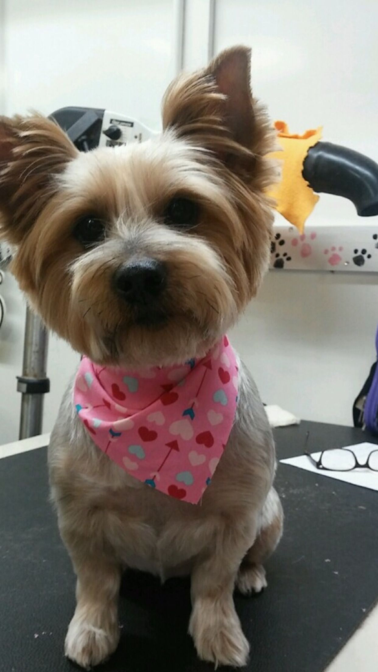 Friend And Companion Pet Grooming And Teaching Academy Houston