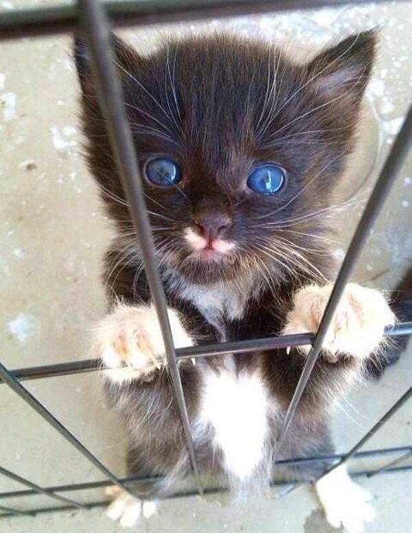 あなたの一日を明るくする可愛過ぎる子猫 - http://pokkekun.jp/blog-entry-1927.html?sp
