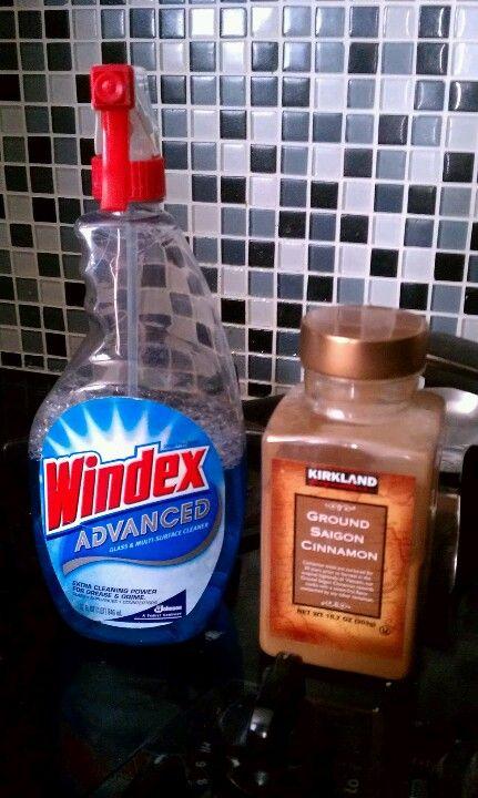 Ant Problem Windex Kills Them On The Spot Then Use Cinnamon