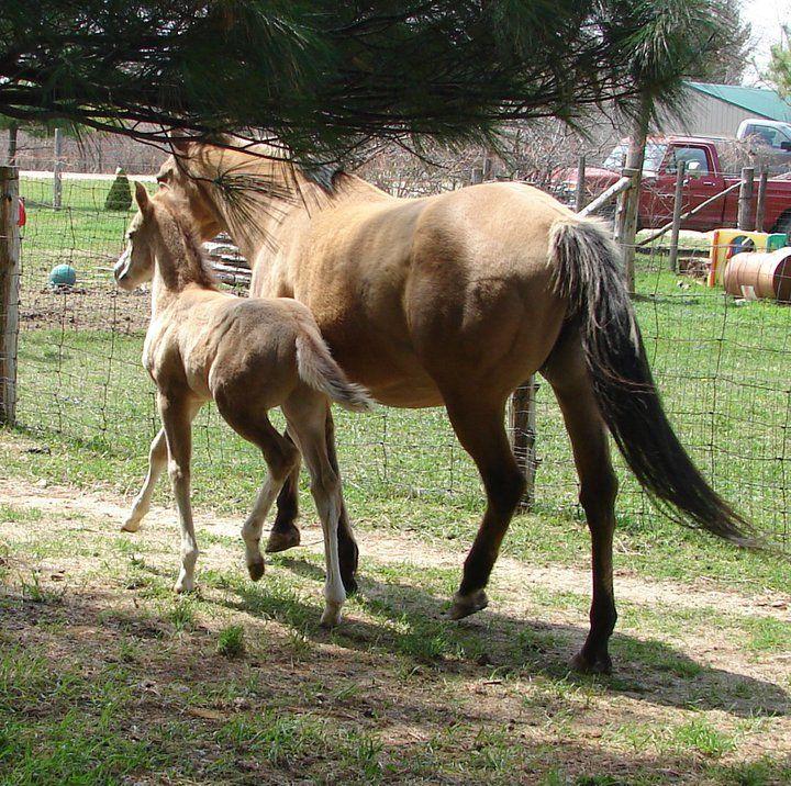Pin on horsin around