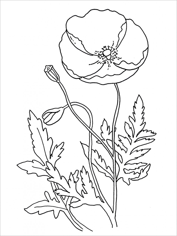 21 Poppy Coloring Pages Free Printable Word, PDF, PNG