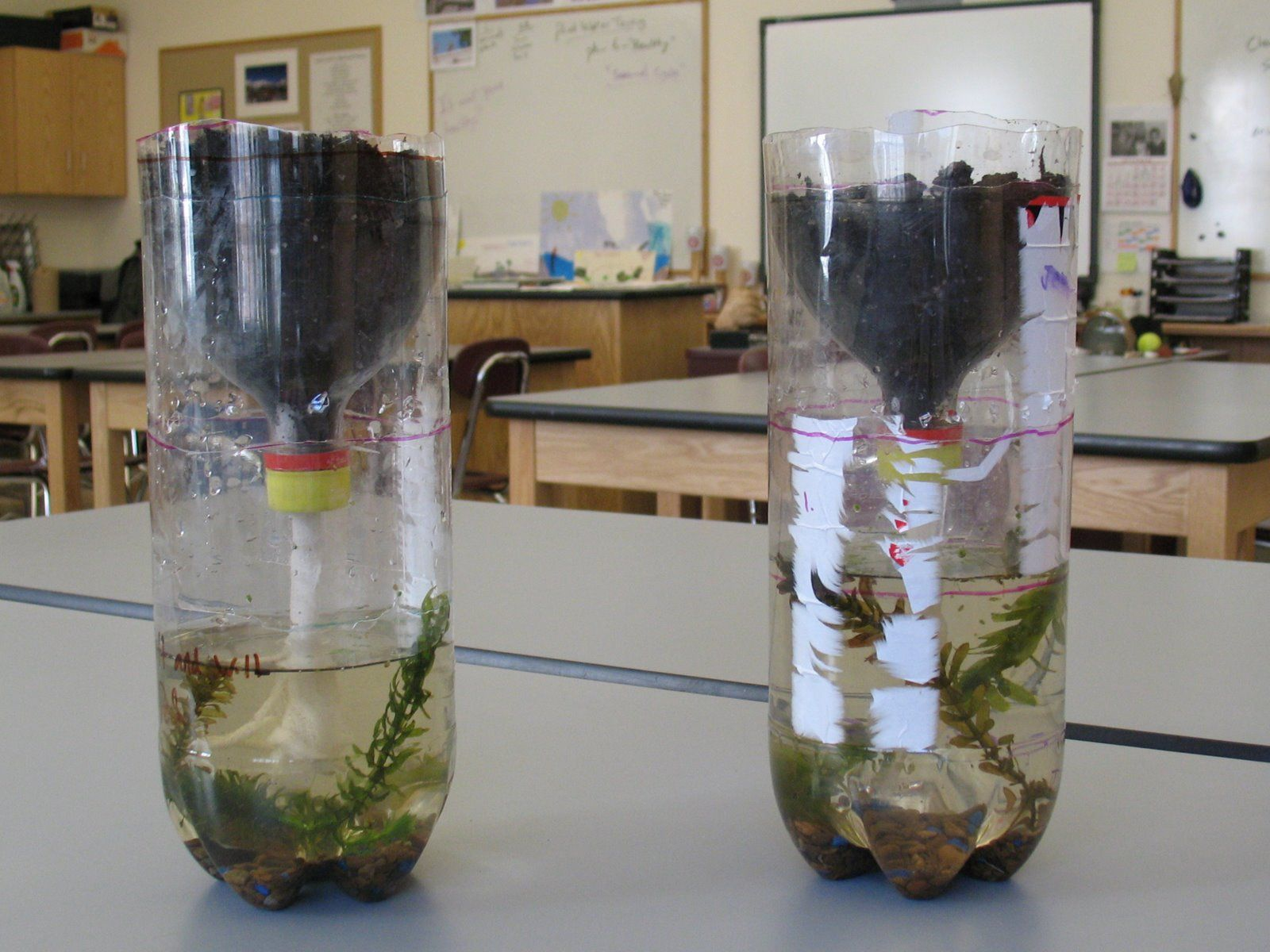 two layered bottle ecosystem A biosphere is any closed, self-regulating system of ecosystems (or ecosystem)   this will create a drainage layer and water basin for the excess water in  you  could also add a bug or two, like a cricket or beetle or worm.