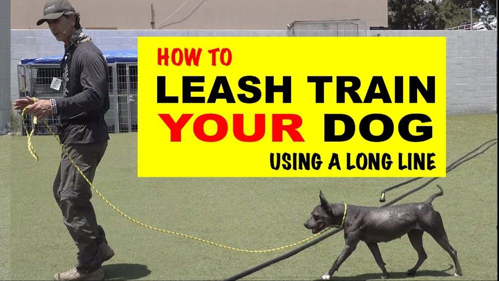 How To Leash Train Your Dog Using A Long Line Robert Cabral Dog