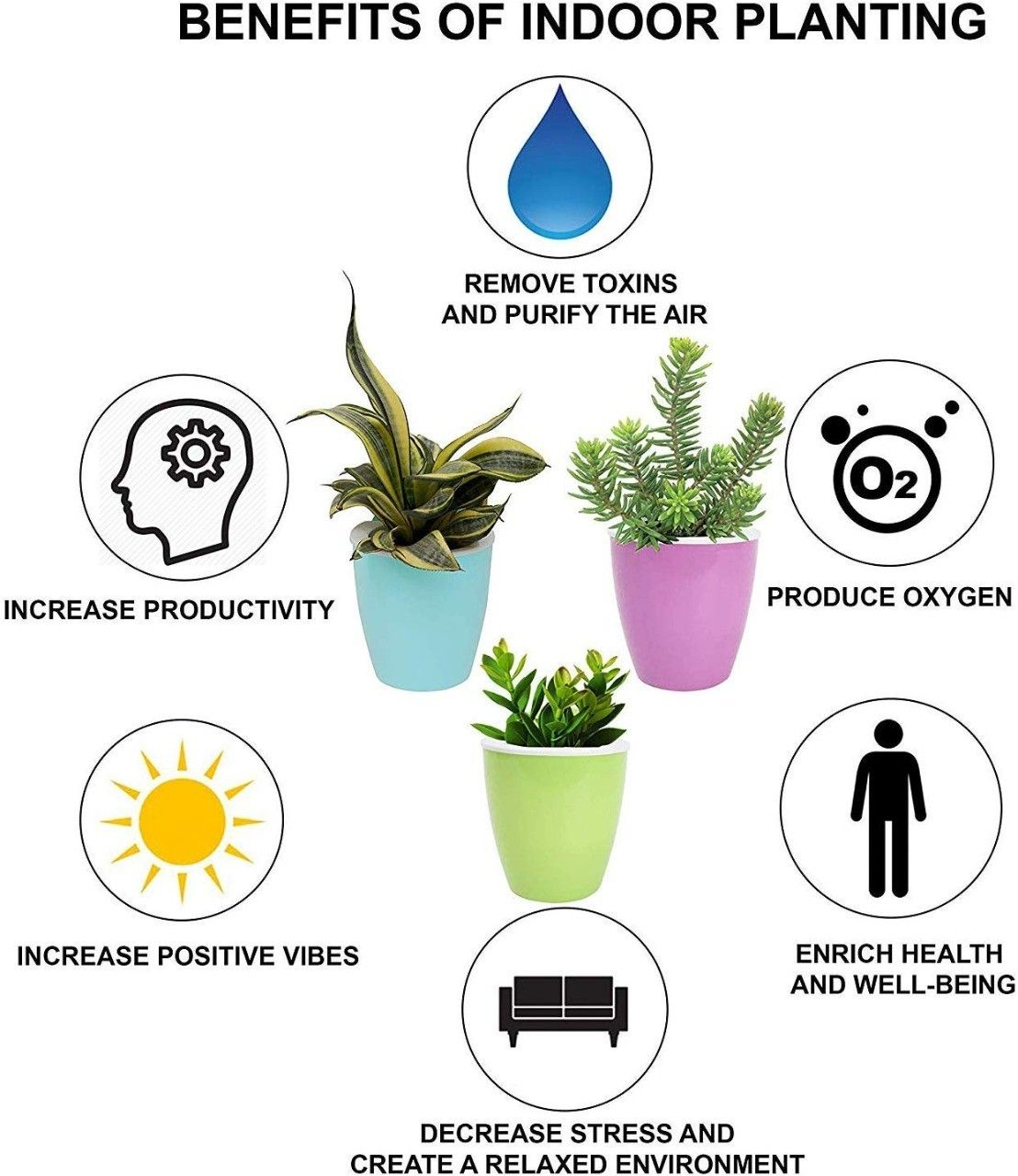 Mini Variegated Biblical Myrtle 2.5 Pot Myrtus Fairy GardenHouseplant