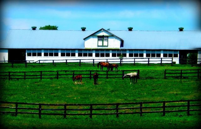 Real Estate Pics   just one of many beautiful horse farms in KY    mykyhome.biz