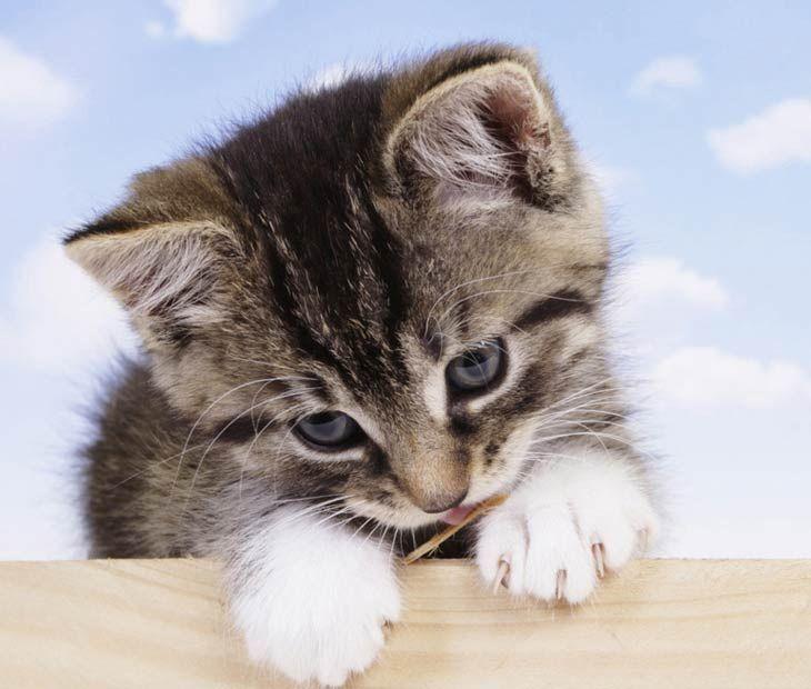 фото красивых кошек и котят