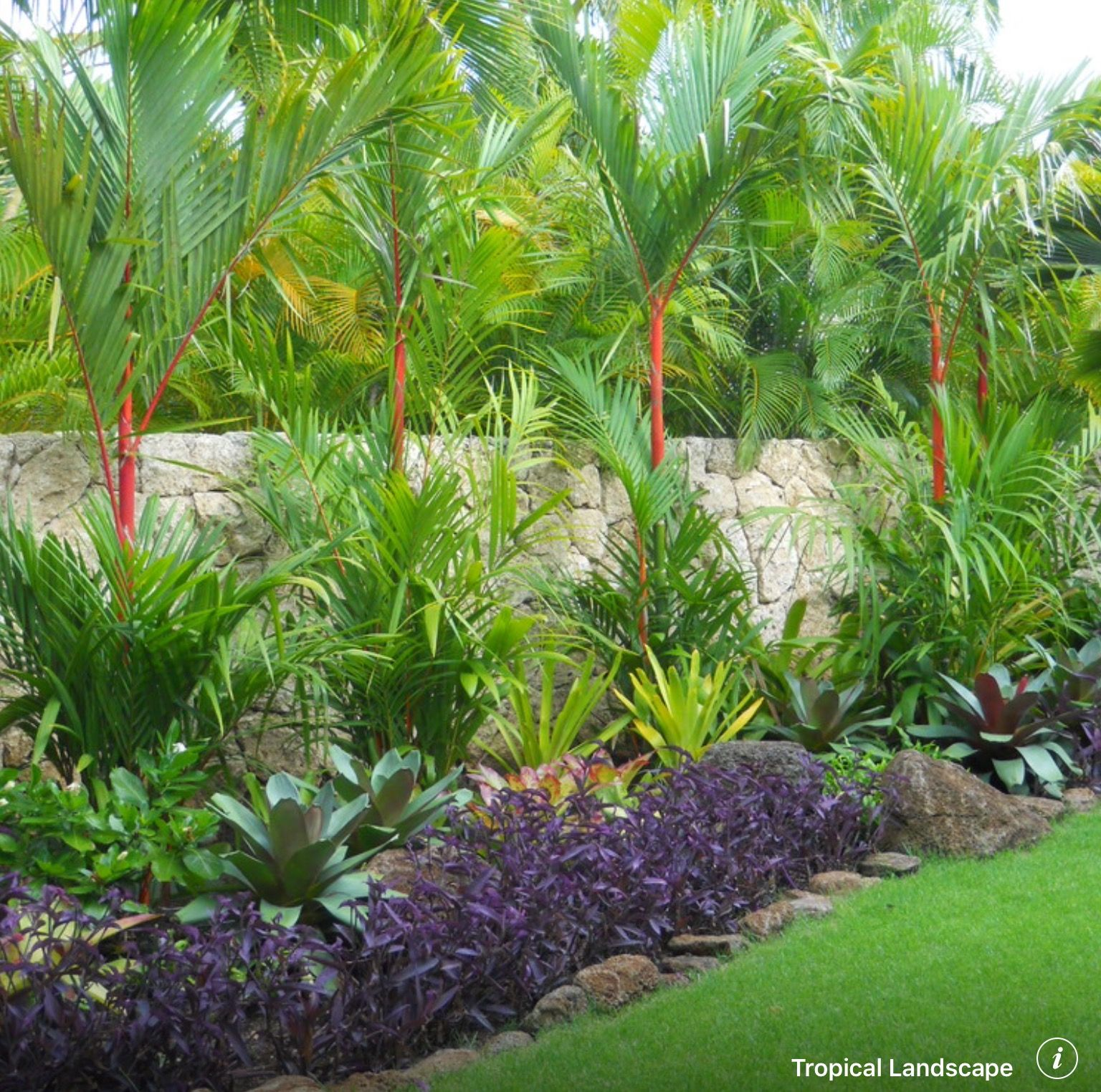 Tropical Backyard Landscaping, Tropical