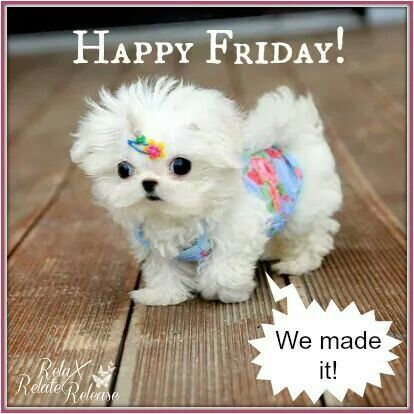 Happy Friday We Made It | Good morning friday, Happy ...