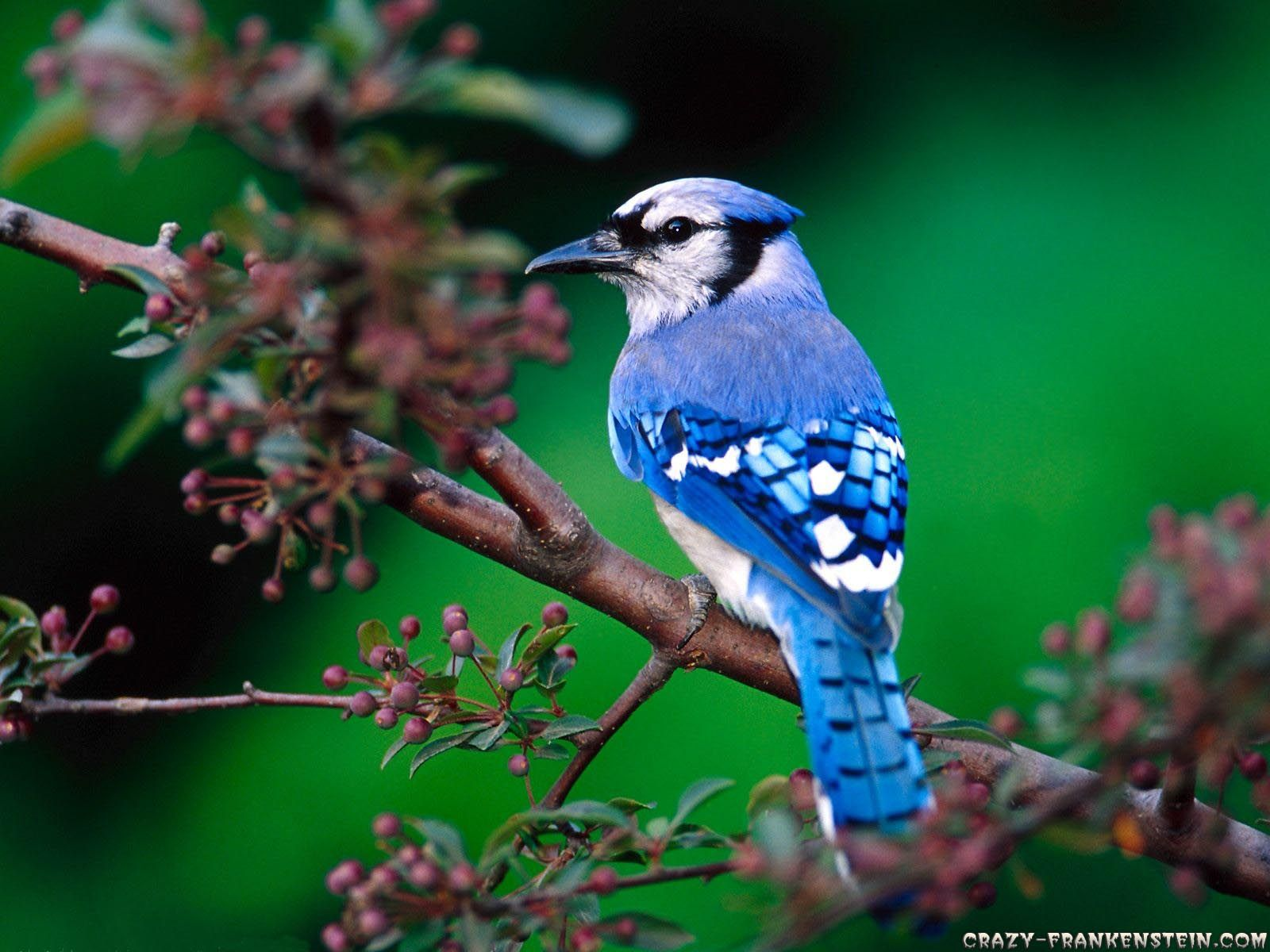 xpx Bird Wallpaper images for free