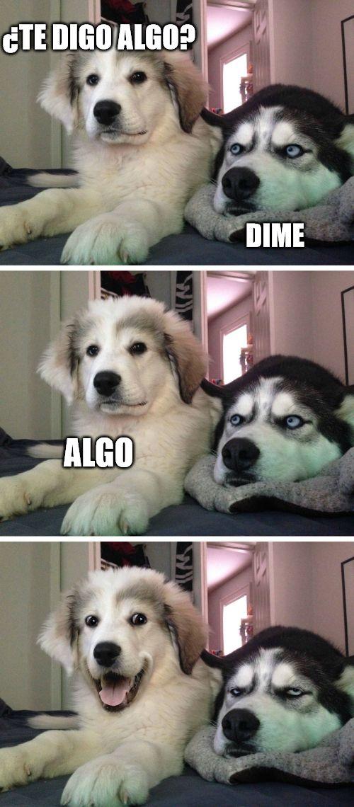 Te Digo Algo Dog Jokes Dog Memes Clean Dog Puns