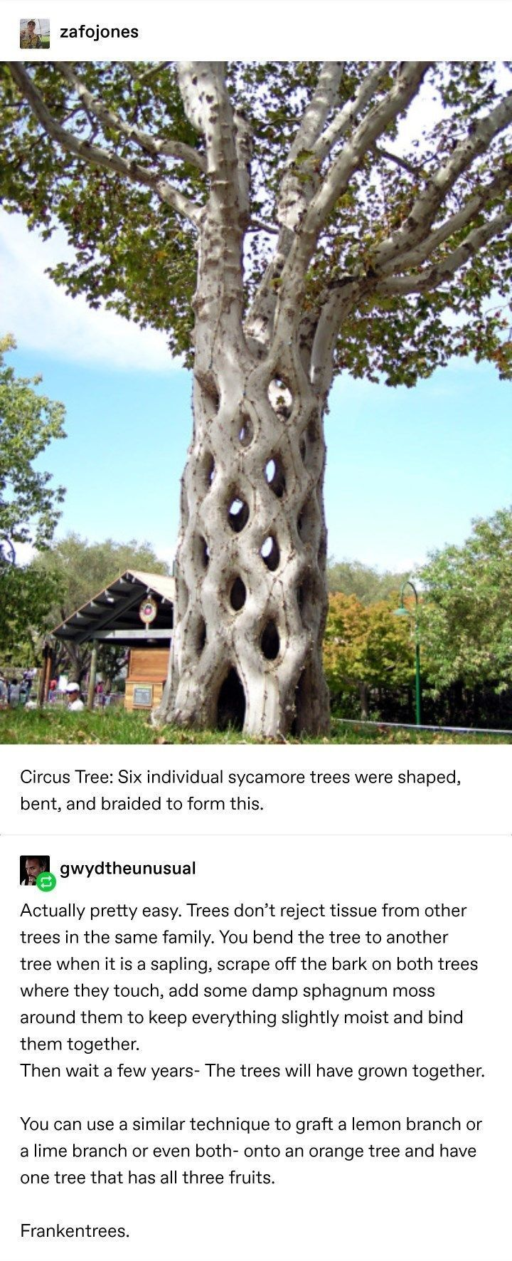 Tumblr Thread : Trees Are Low Key Monsters