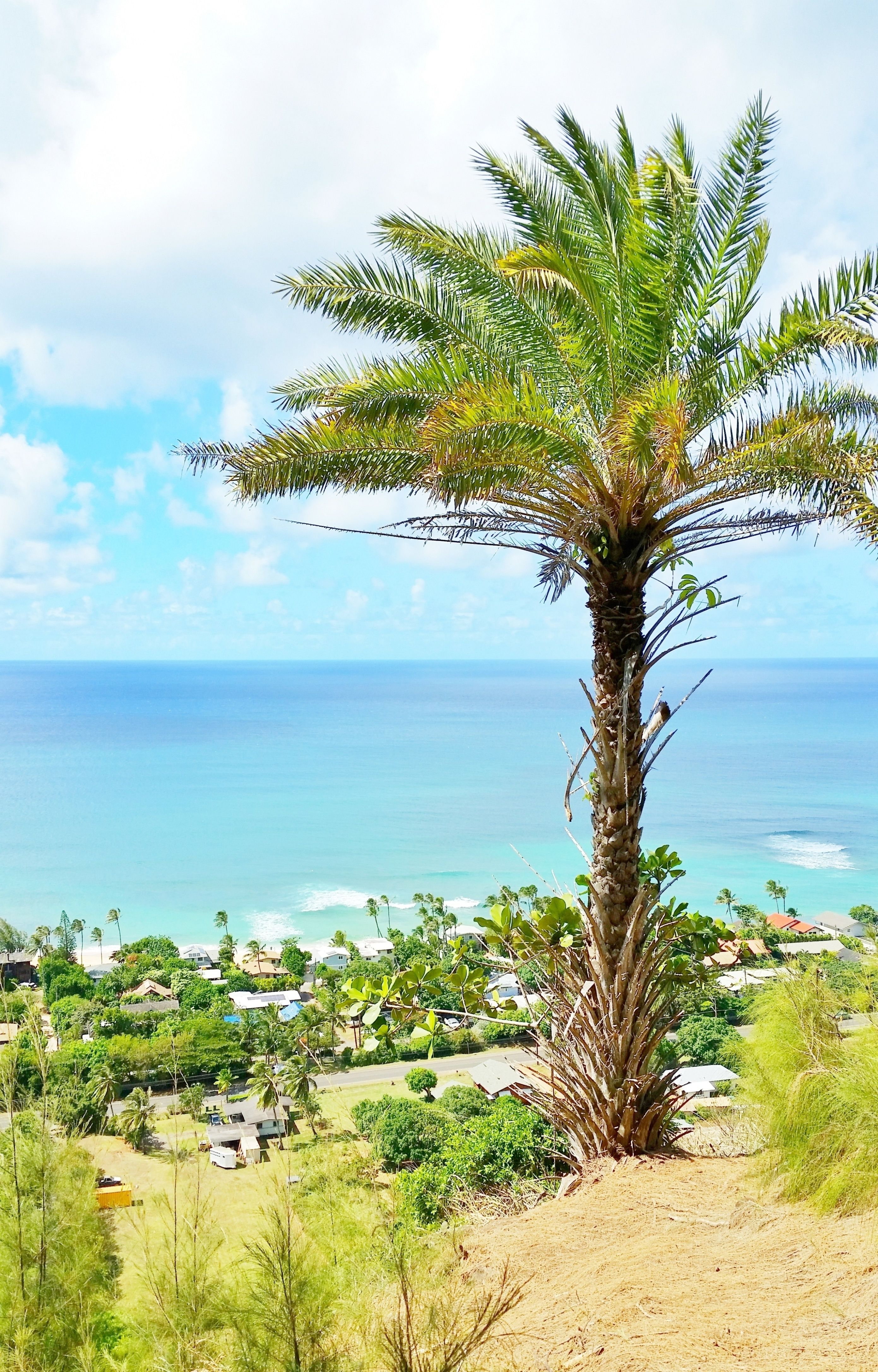 Hawaii Travel Photography Best Things To Do On North S Oahu With Ehukai Pillbox Hike Near Sunset Beach Surfing Spots And Surf Camps