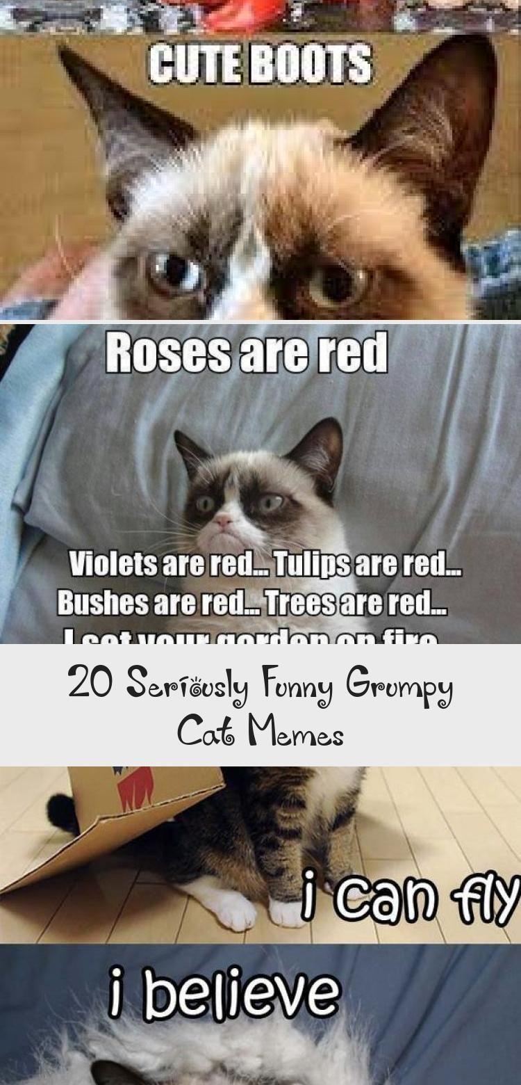 Photo of 20 ernsthaft lustige mürrische Katzenmemes – Humor – 20 ernsthaft lustige mürrische Katzenmem …