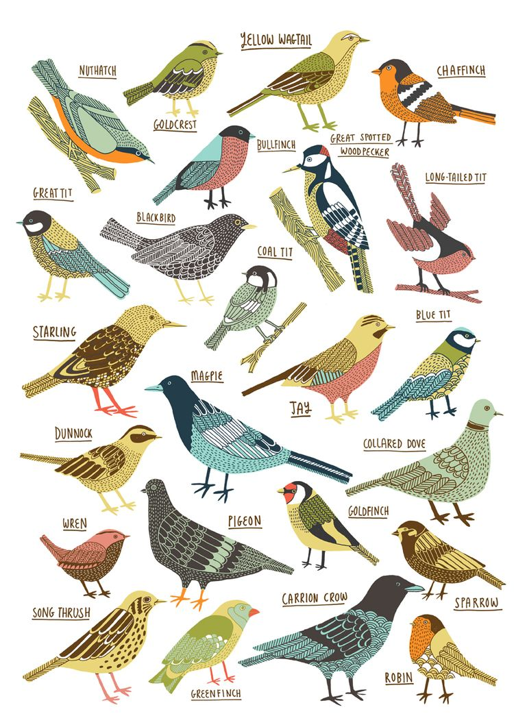Kate Sutton Illustration British Garden Birds