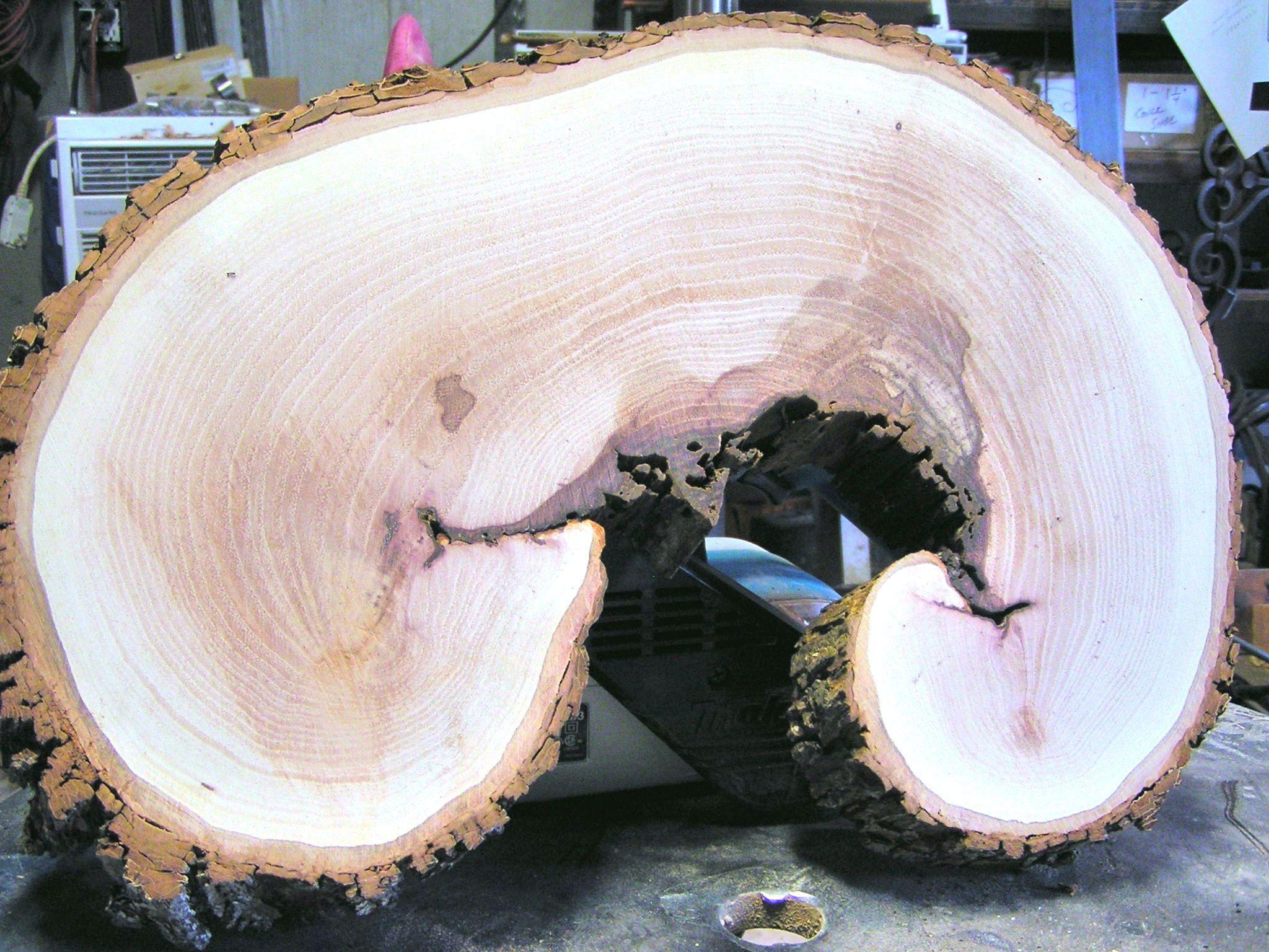 Live Edge Pecan Round Wood Slab 1 For Carving Wood Burning Painting Signs Address Markers Floating Shelf Etc Wood Slab Weather Wood Diy Wood Design