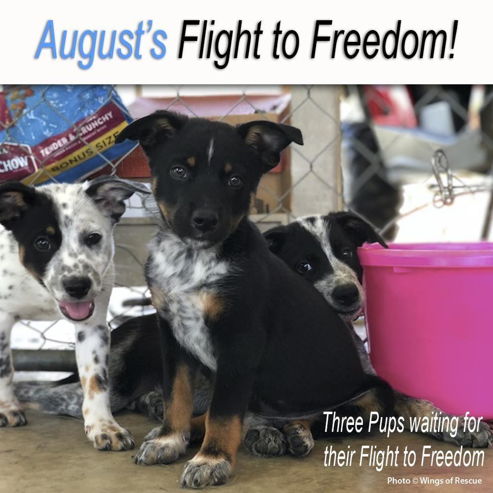 Help Fly Pets To Freedom Https Theanimalrescuesite Greatergood Com Store Ars Item 81474 Origin Fk Flights 81474 2018081 Dog Training Barking Pets Dog Help