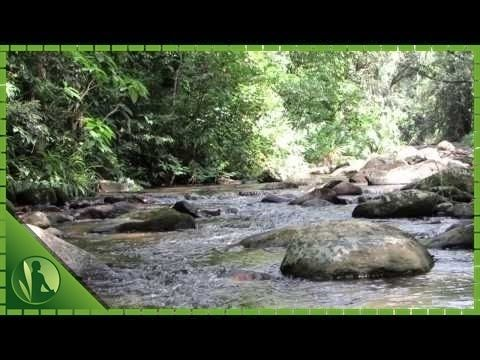 MÚSICA PARA ANSIEDADE para Relaxar Meditar Dormir - YouTube