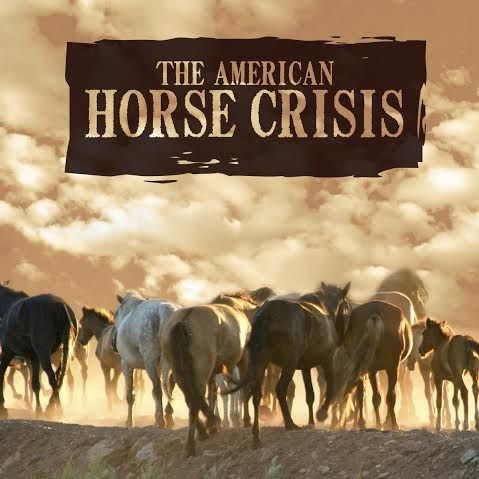 HSUS Brings Poorly-Conceived Fertility Control Plan To Feral Horse - control plan