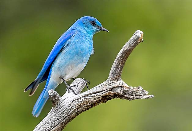 Attract Bluebirds to Your Yard with Nest Boxes - Birds and ...