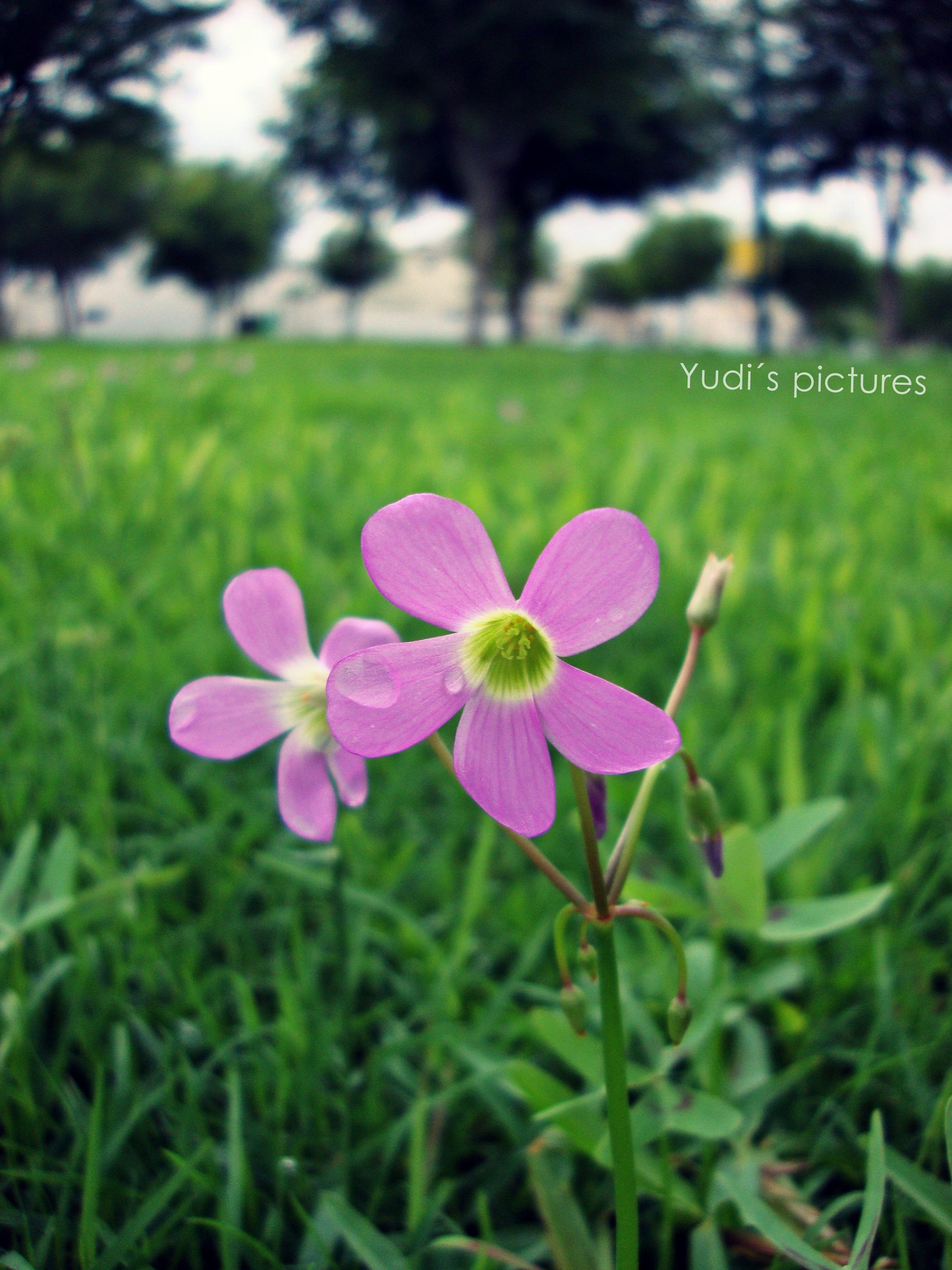 La naturaleza... el amor de Dios alrededor nuestro...
