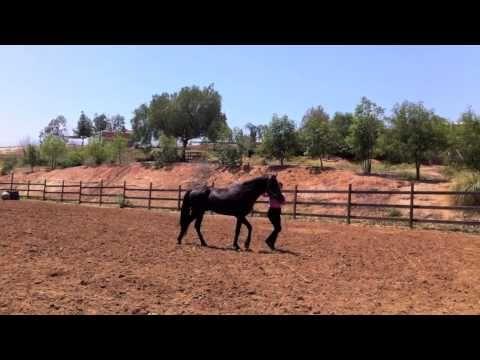 Beginning liberty Training with Zorro de Los Cielos part 2