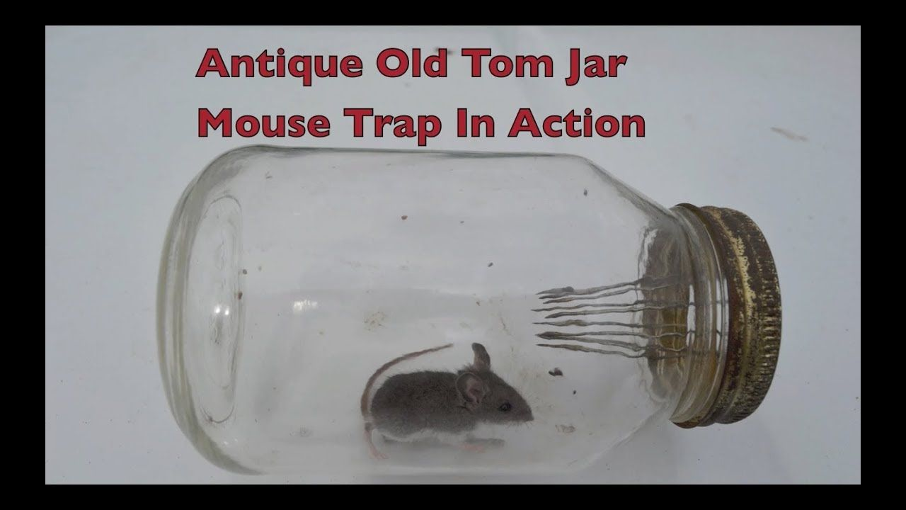 Antique Old Tom Jar Mouse Trap In Action With Large Spikes Pieges A Souris Souris Rats