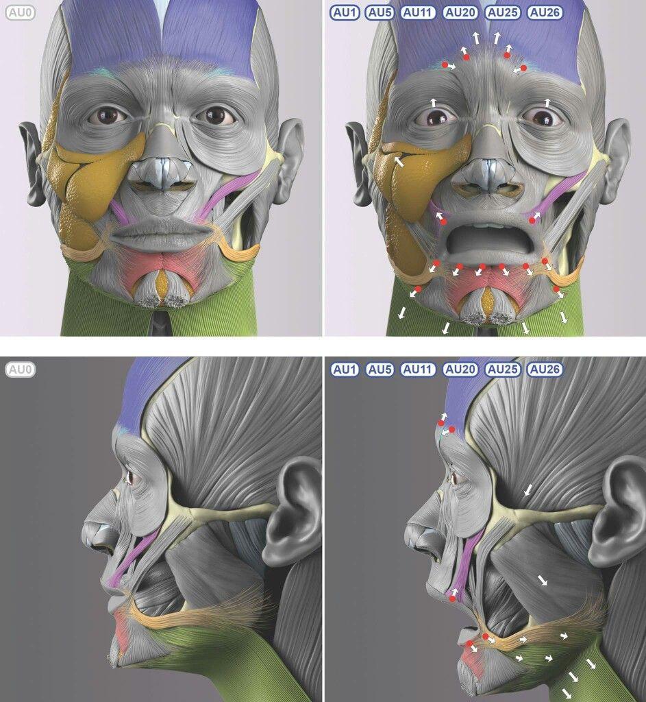 Pin de HyunBo Park en Ref_Anatomy | Pinterest | Anatomía, Expresion ...