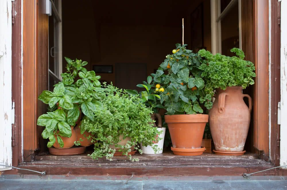 Ideal Plants For North South East West Windows
