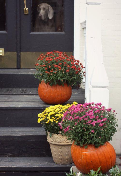 17 Spooktacular Outdoor Halloween Decorations