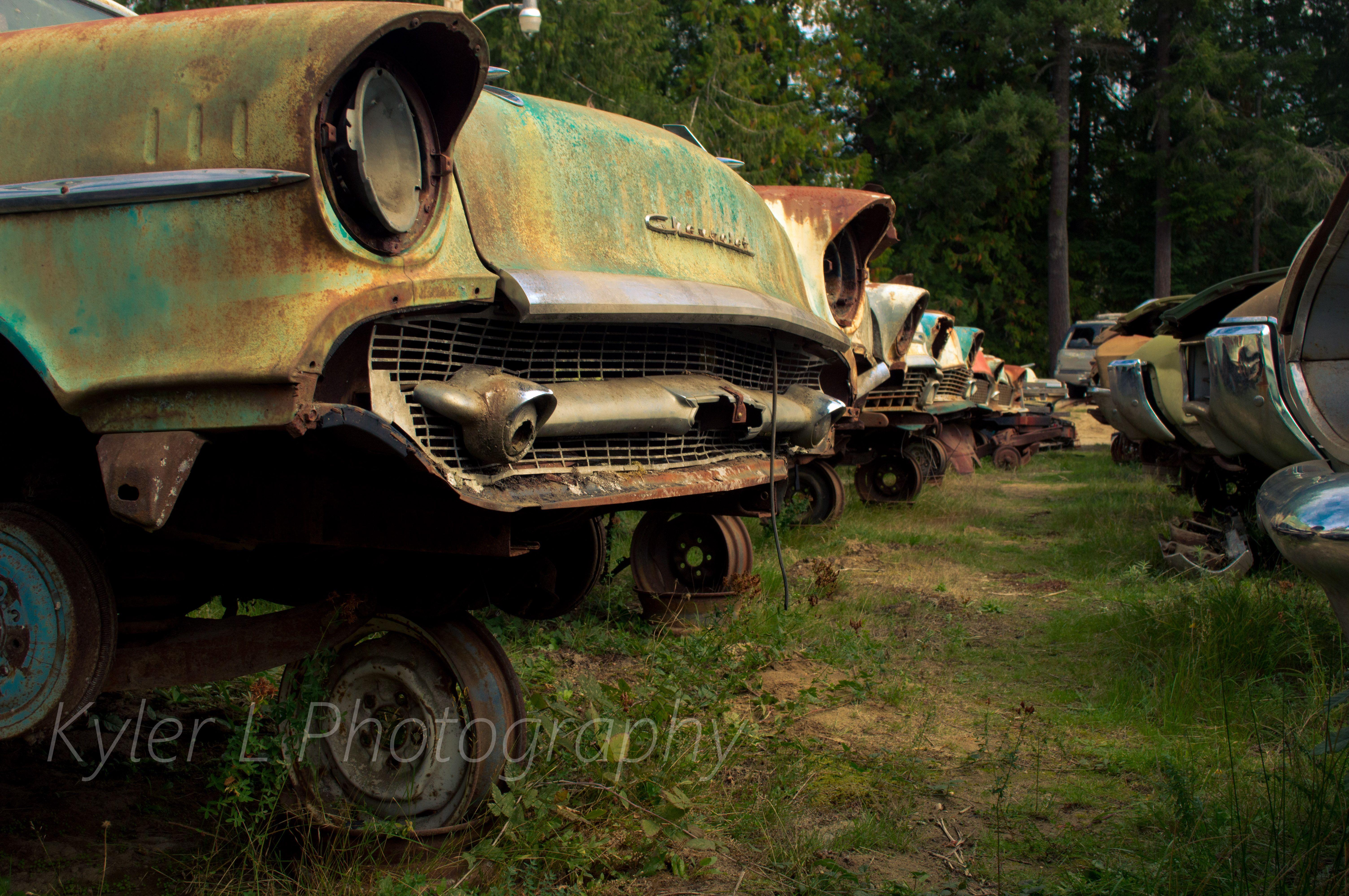 Old cars at a wrecking yard in Northwestern Washington