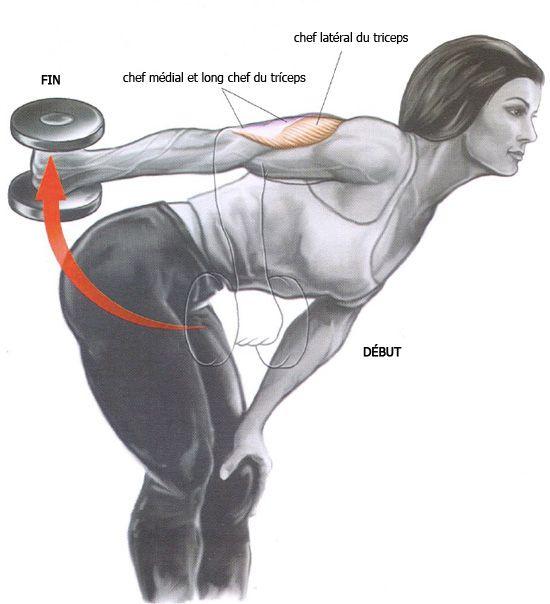 Exercices bras – Extension triceps alternée avec haltère - Logon Prozis ffcdeb7ec64