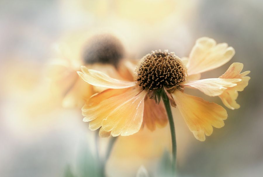Photo Softly summer by Mandy Disher on 500px