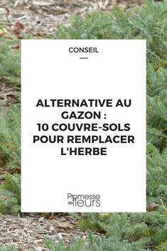 alternatives au gazon 10 couvre sols pour remplacer la pelouse jardin pinterest potager. Black Bedroom Furniture Sets. Home Design Ideas