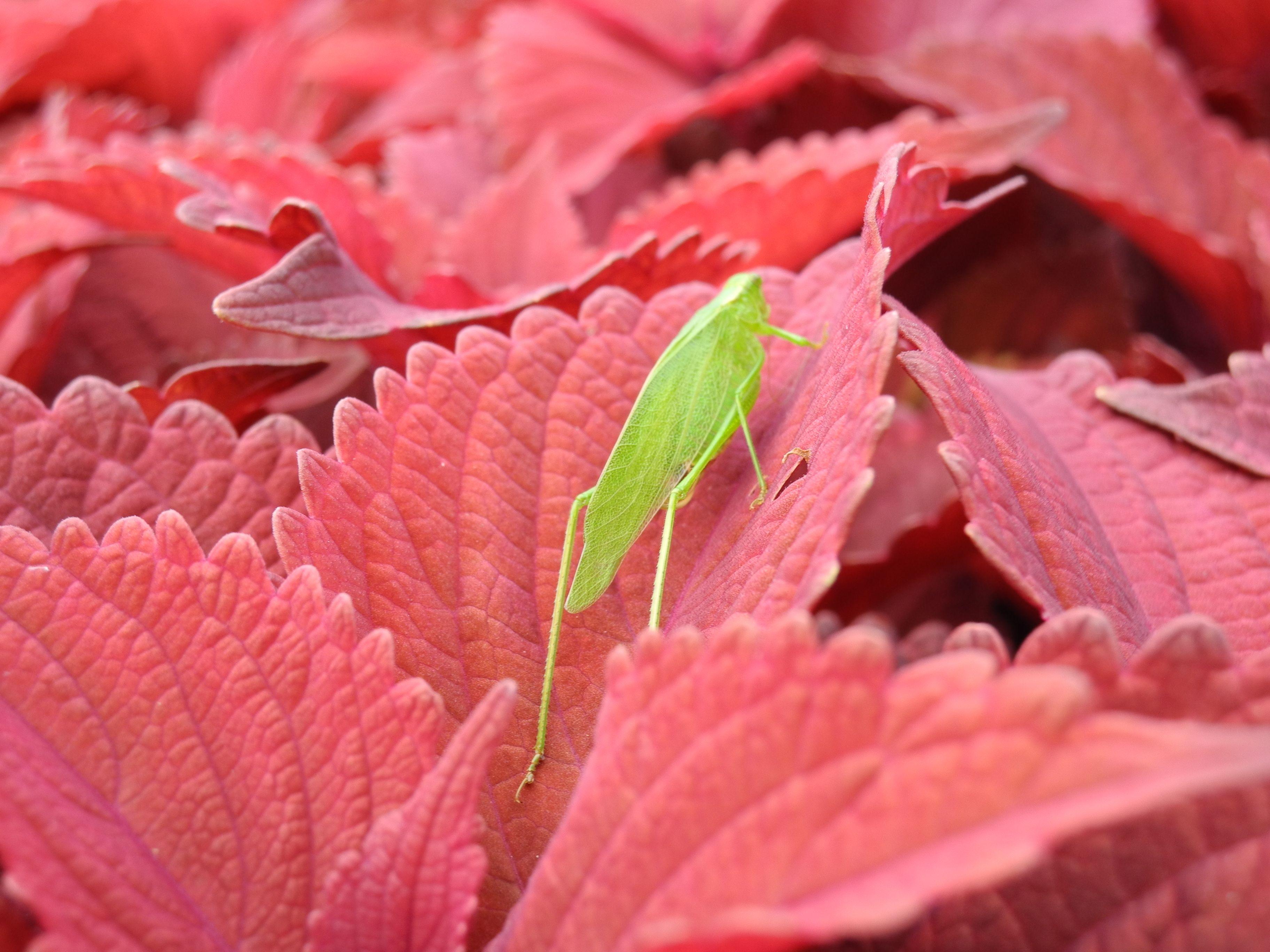 Cute Little Cicada Plant Leaves Foliage Plants