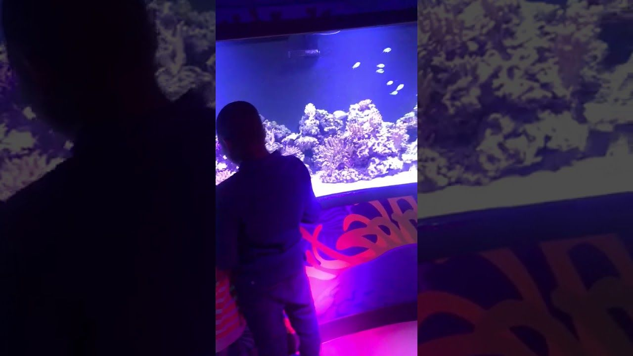 At The London Aquarium The Post Aquariums The Aquarium Appeared First On Flake Food Aquarium Planted Aquarium Park Art