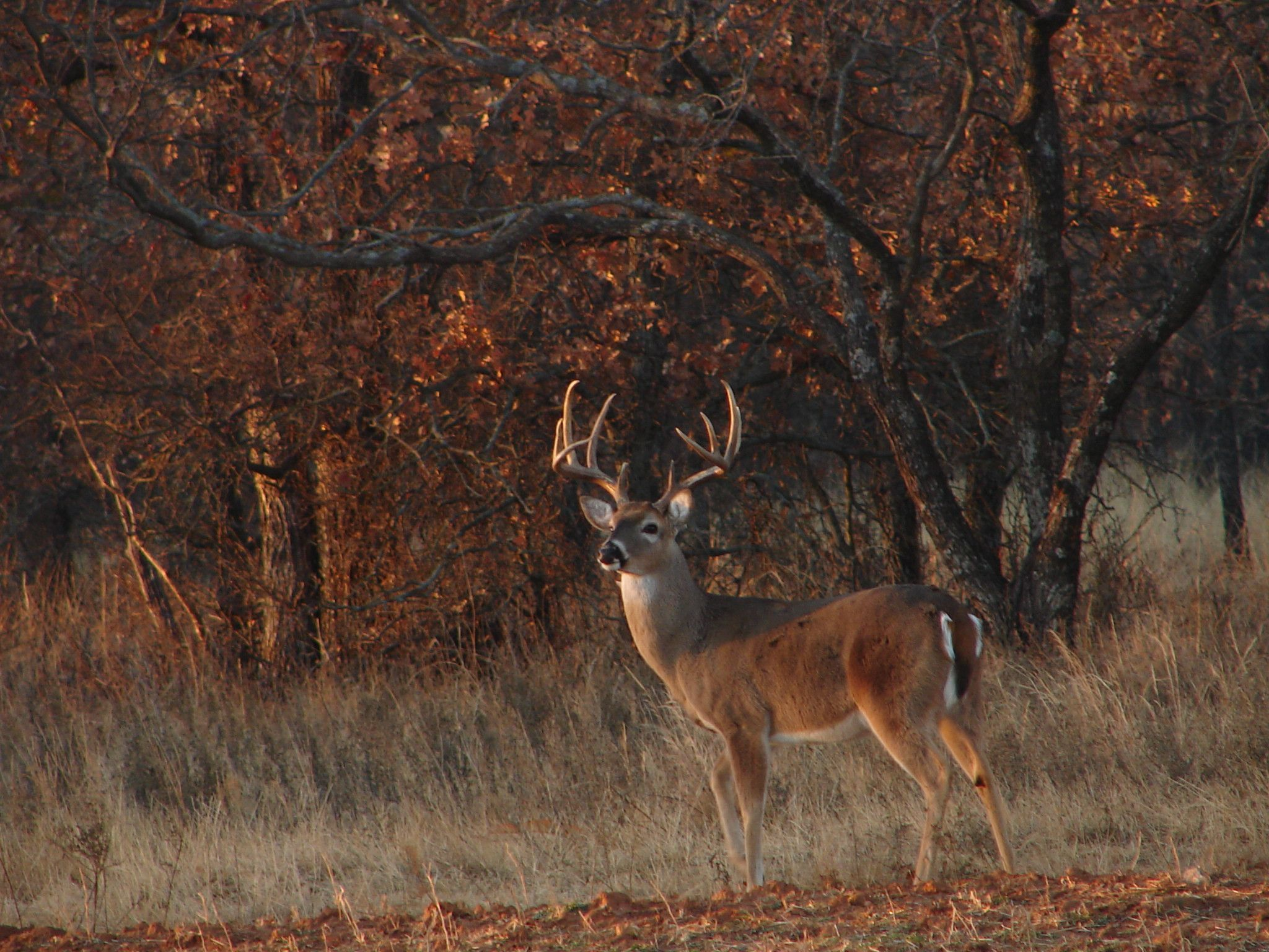 Image result for BEST BUCK PICTURES FOR COVER PHOTOS